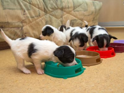 Best Dog Food For Puppies Reviews