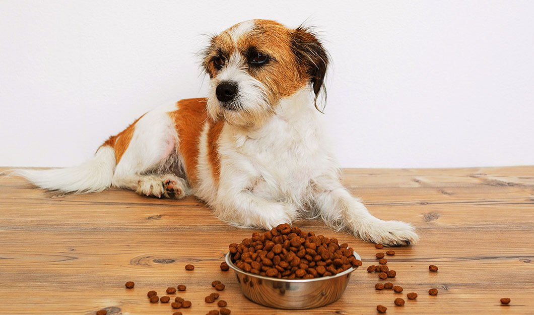 Best-Dog-food-for-Sensitive-Stomach