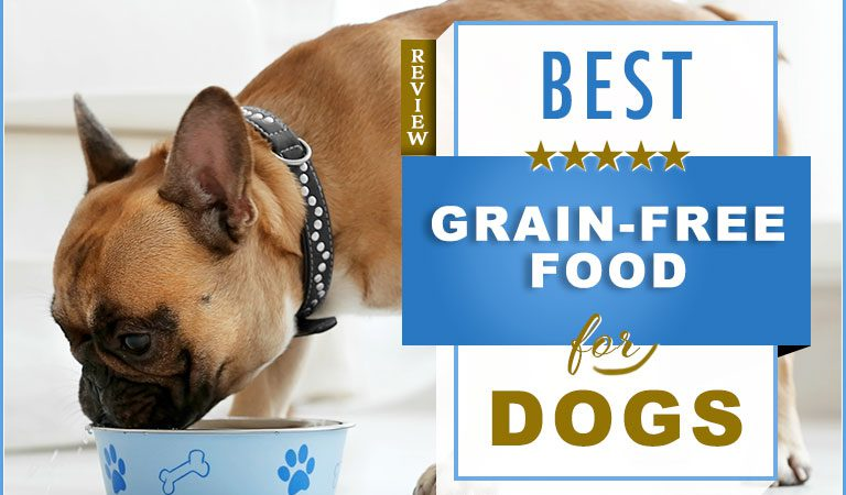 Best Grain Free Dog Food Review