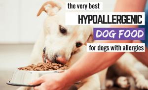 Why use Hydrolysed dog Food