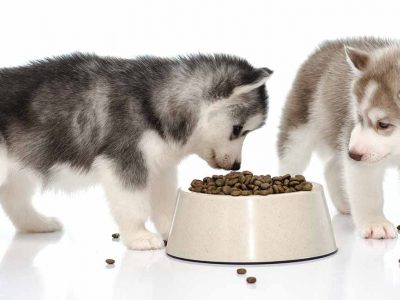 Best Dry Dog Food for Huskies