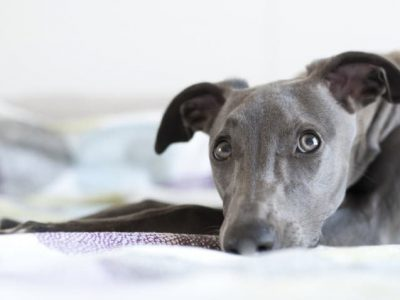 Best Dog Food for Dogs With Hypothyroidism