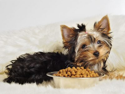 What Is The Best Dog Food for Yorkies