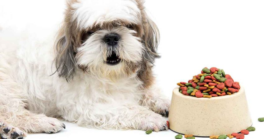 Best Dog Food for Shih Tzu With Allergies