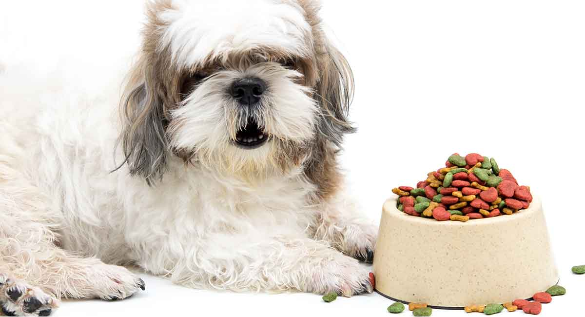 Best-dog-Food-For-Shih-Tzu