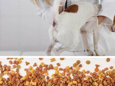 Best High Fiber Dog Food Anal Gland Problems Review
