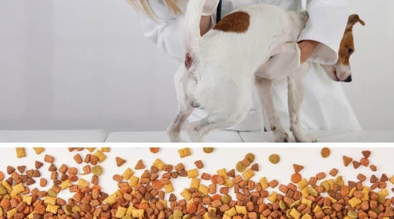 best-high-fiber-dog-food-anal-gland-problems-2020