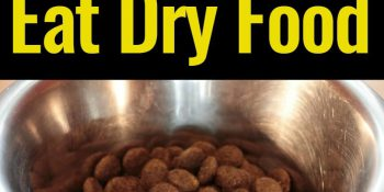 How To Get My Dog To Eat Dry Food