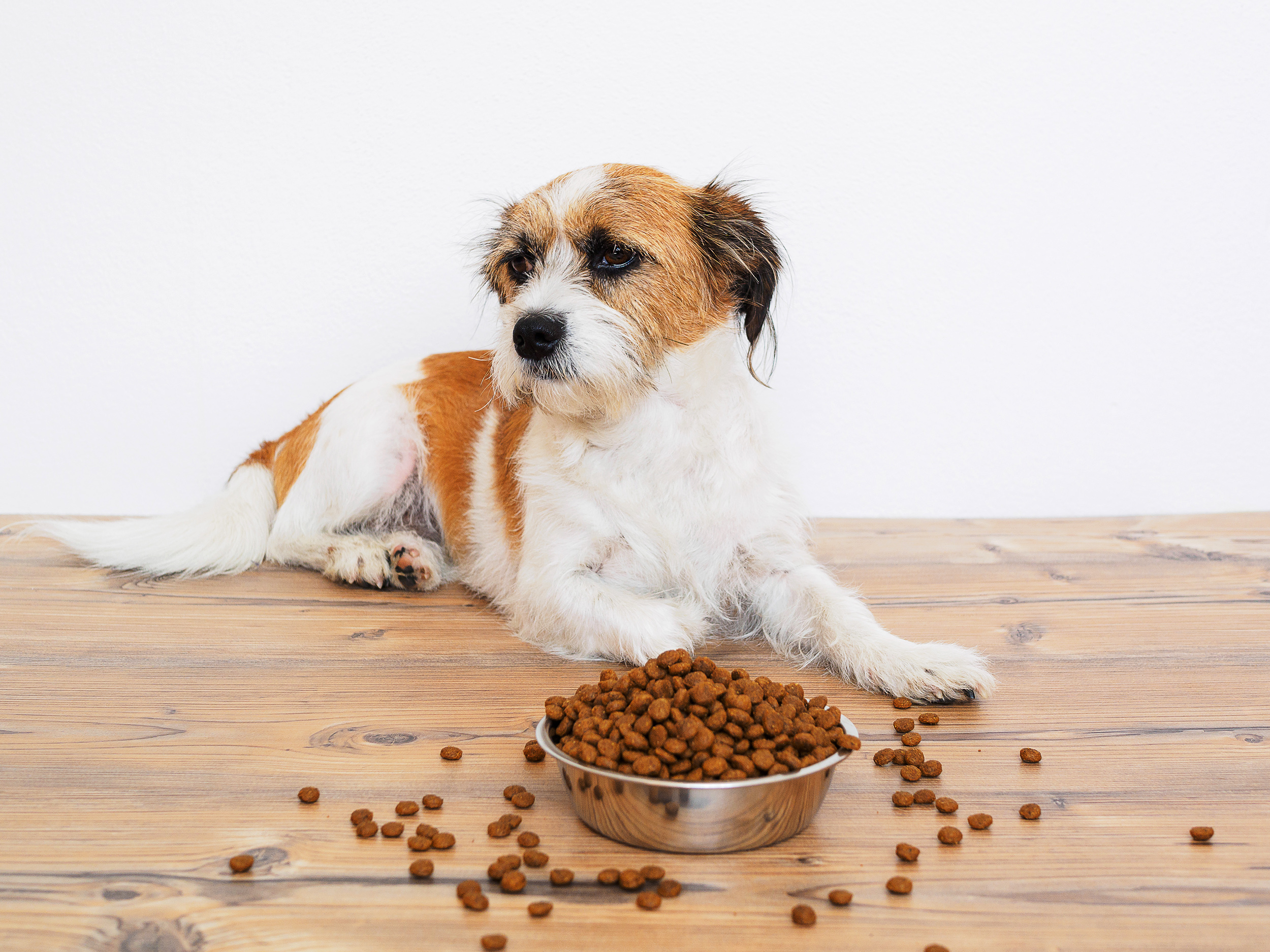 How To Tell If a Dog Food Is Bad