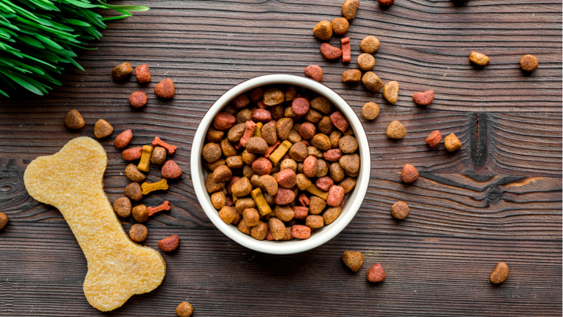 Regular Dog Food vs. Grain-Free Dog Food