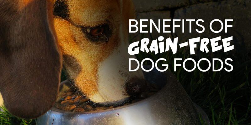benefits-grain-free-dog-foods