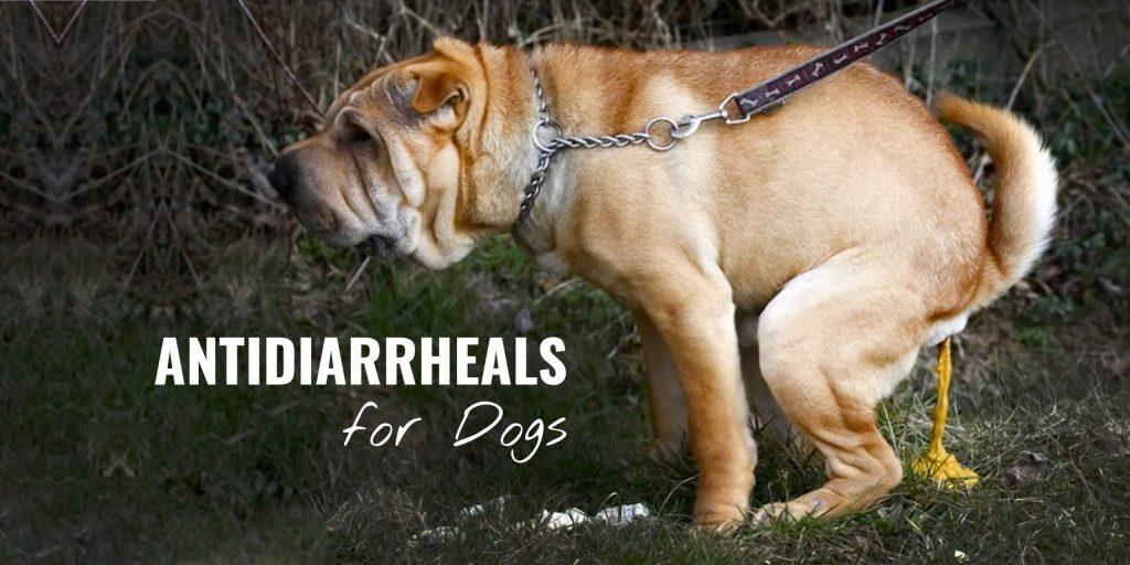 my dog with diarrhea