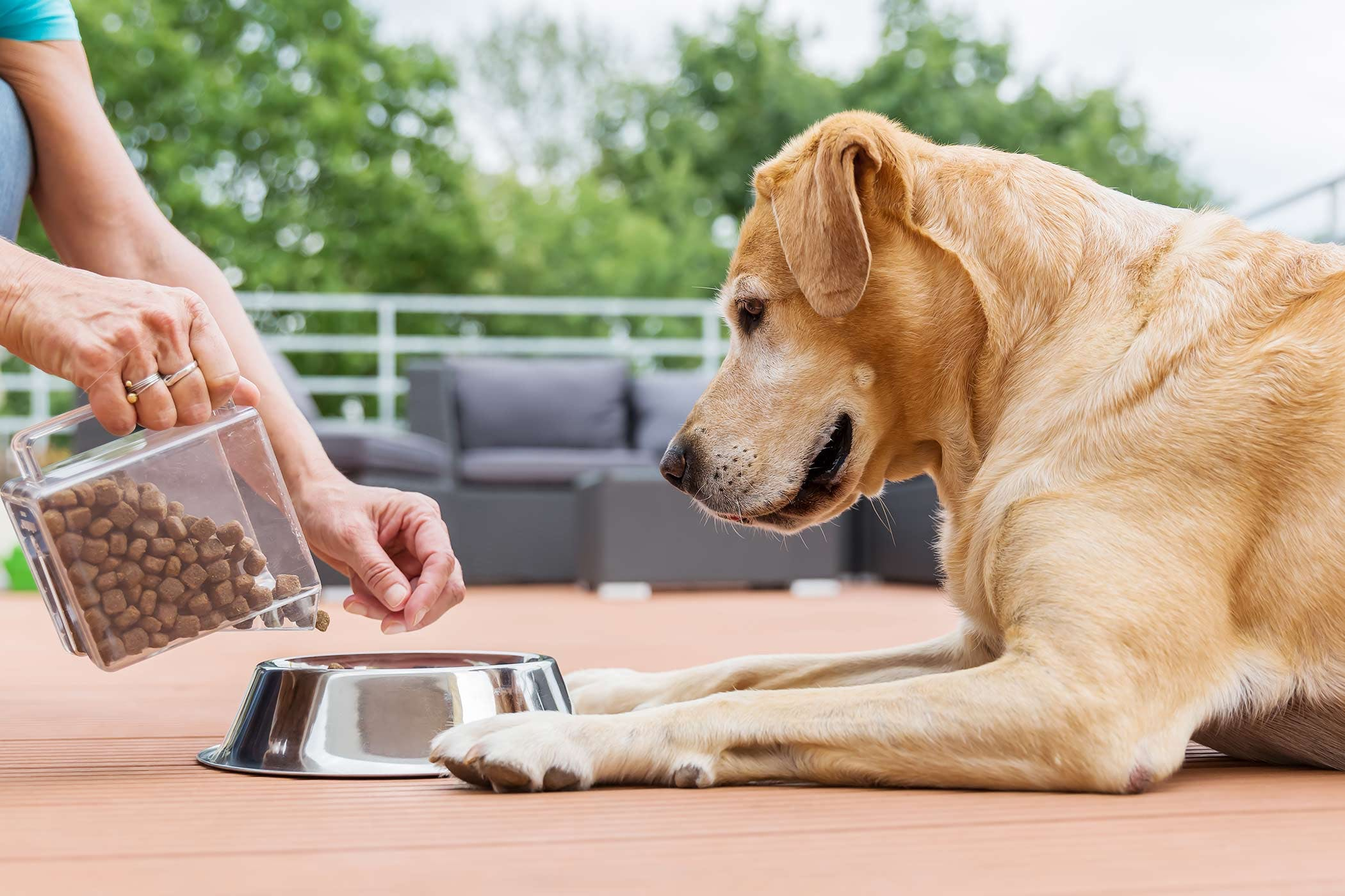 why-is-my-dog-not-eating-dry-food
