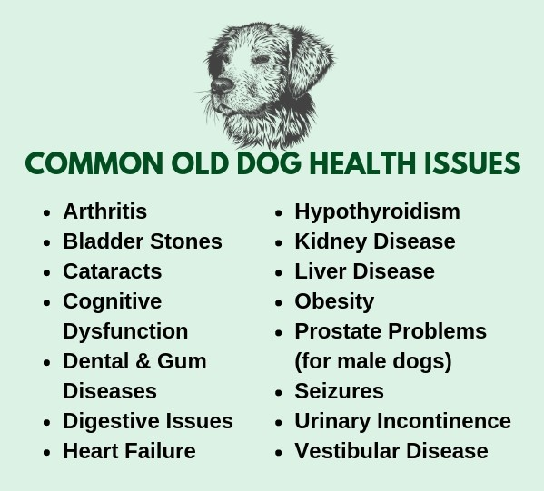 Common health problems in senior dogs