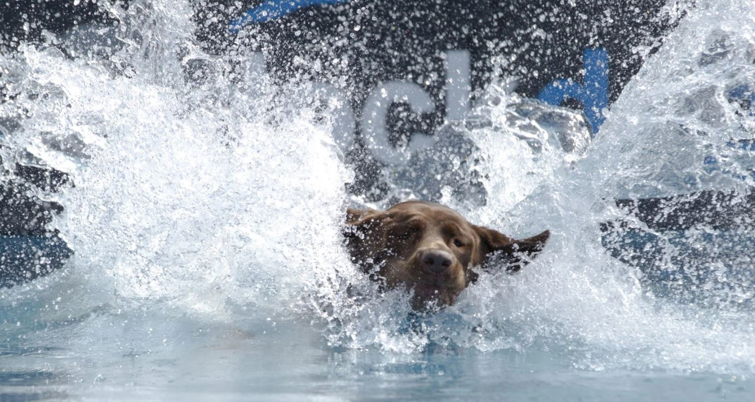 Advantages of Encouraging Your Dog to Swim