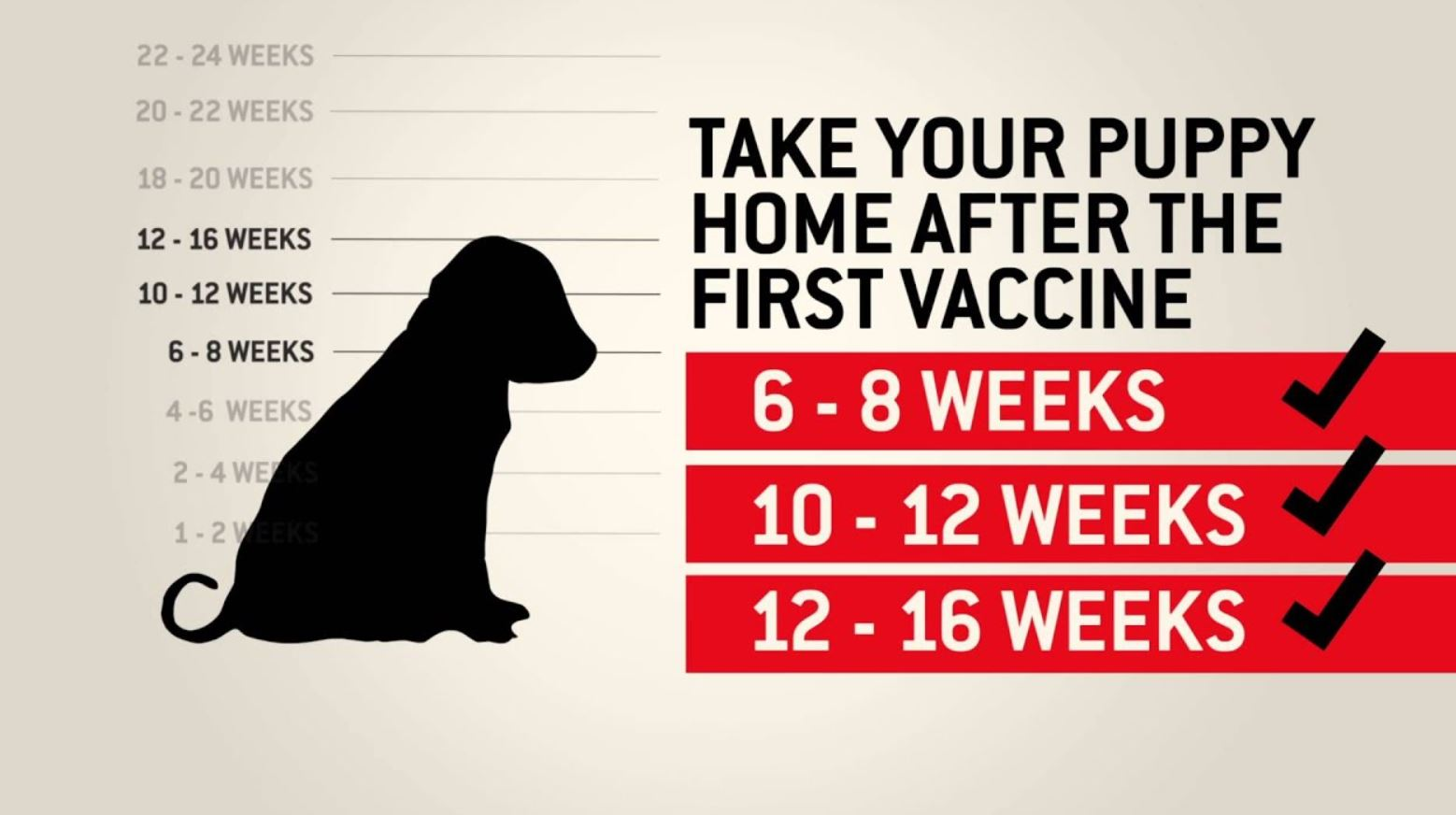 How Often Should Dogs Get Immunizations