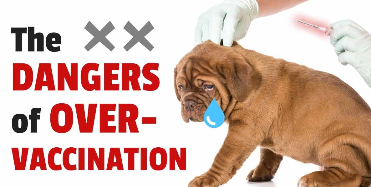 How can Pet Owners Avoid Over-Vaccinating Their Dogs