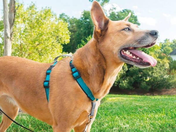 How to Find Dog Collars that Fit Perfectly