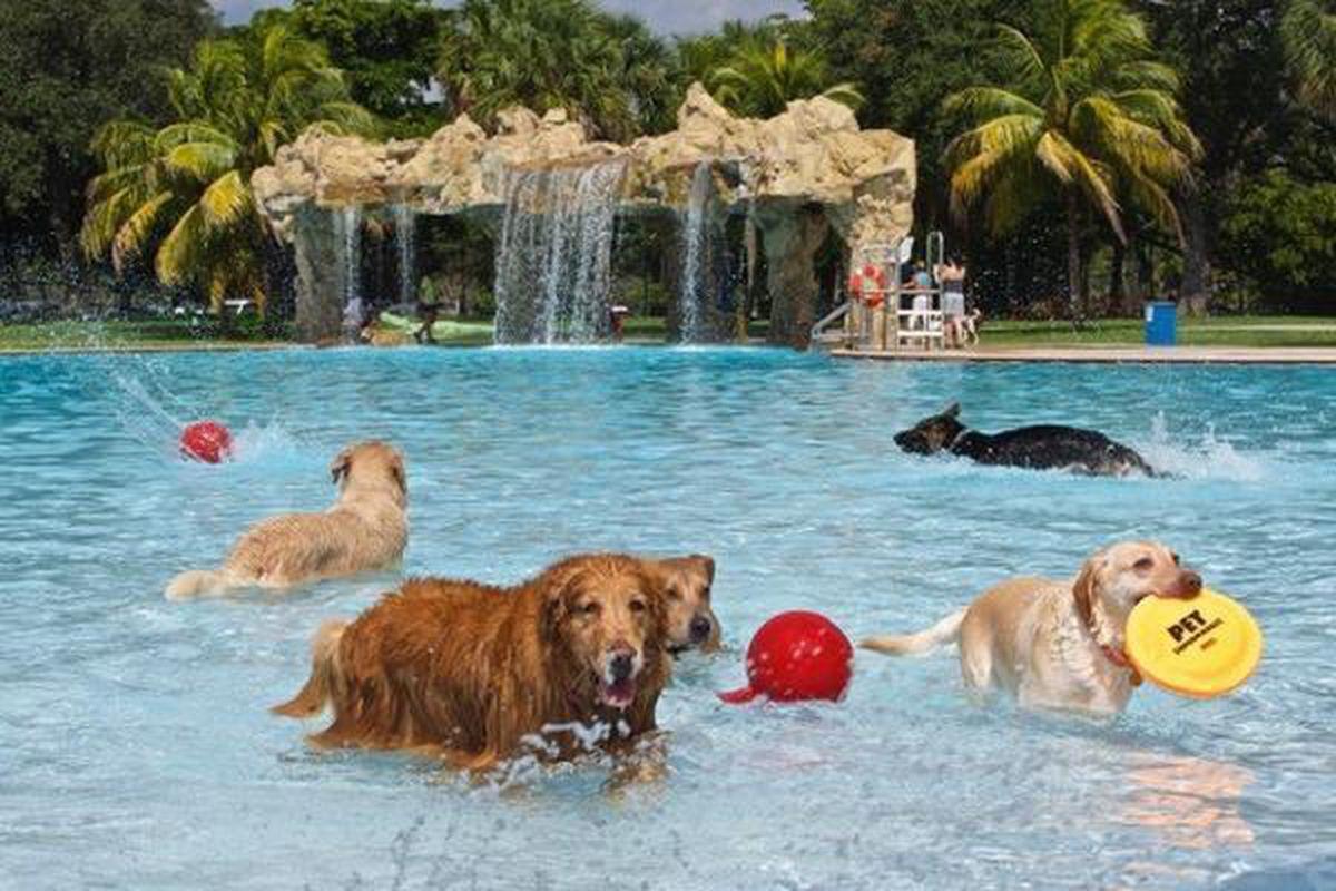 Local Dog Park Pools