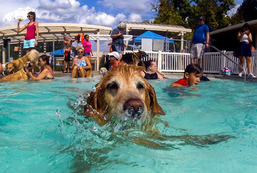 Local Public Pools for dogs