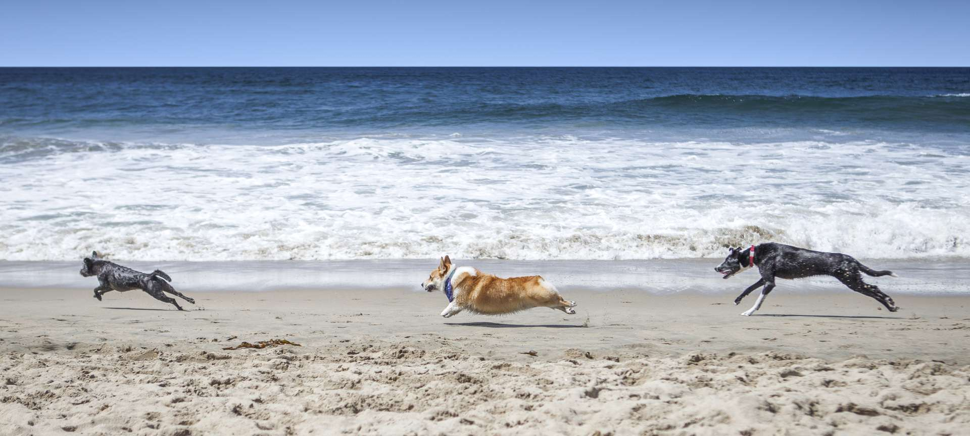 Public Local Beach for dogs