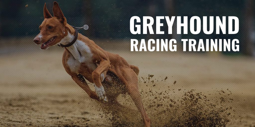 Training Your Greyhound To Socialize