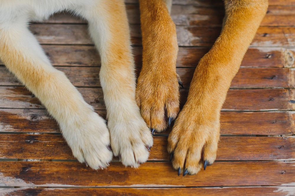 What Are The Benefits Of Nail Trimming For Dogs