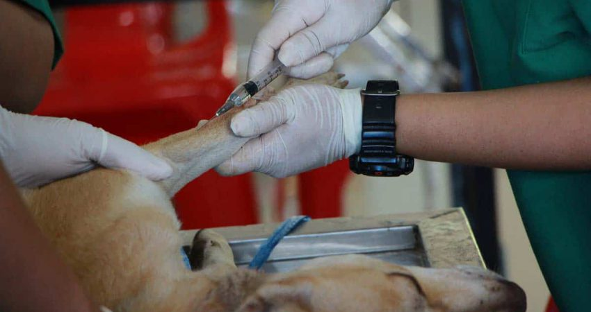 What Happens If A Dog Is Vaccinated Twice?