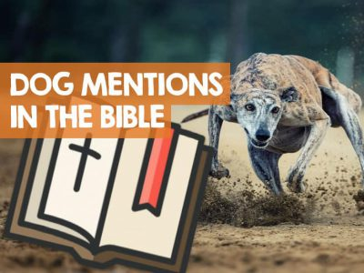 What Is The Only Dog Breed Specifically Mentioned In The Bible?