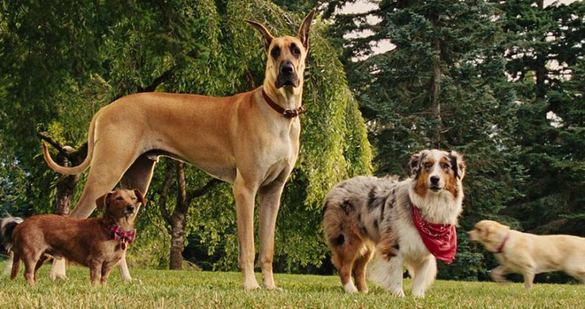 What Kind Of Dog Is Marmaduke?