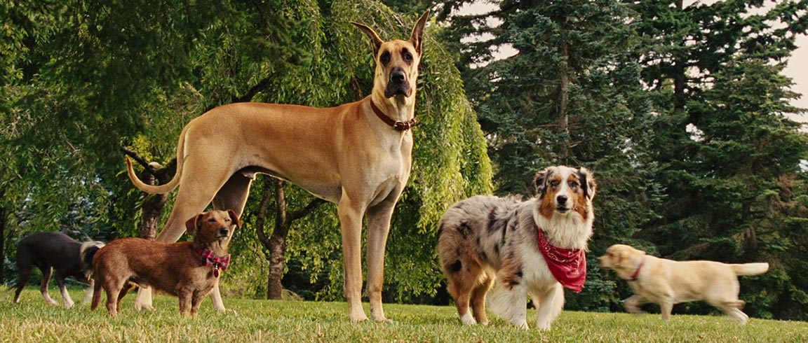 What Type Of Dog Is Marmaduke