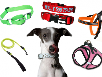 How Tight Should A Dog Collar Be?