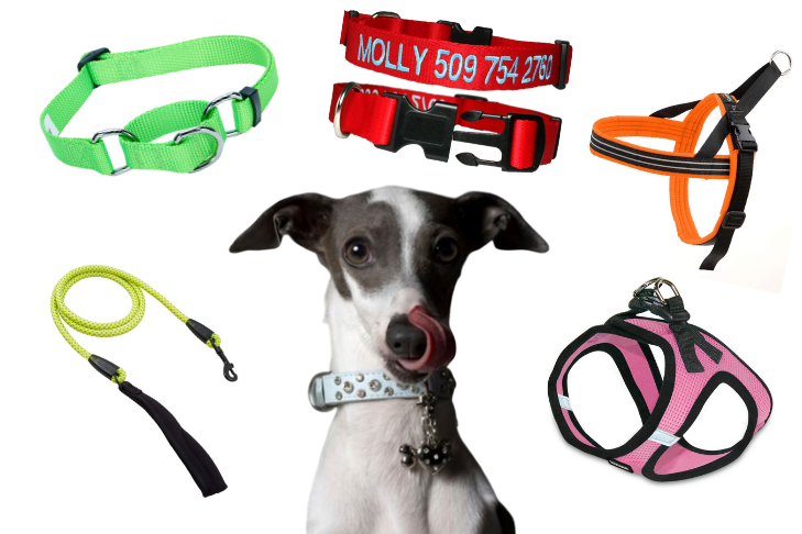 What is a Dog Collar
