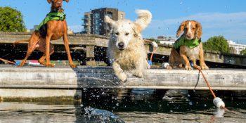 Where Can I Take My Dog Swimming