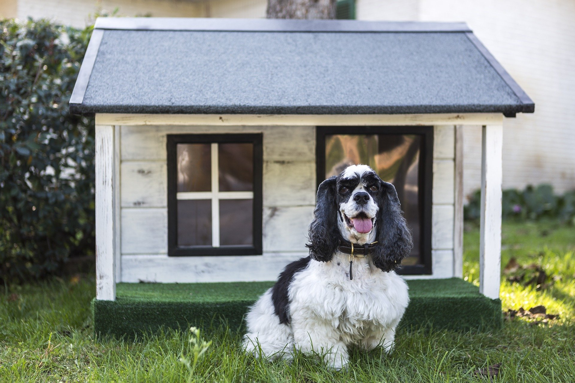 How To Heat A Dog House Without Electricity