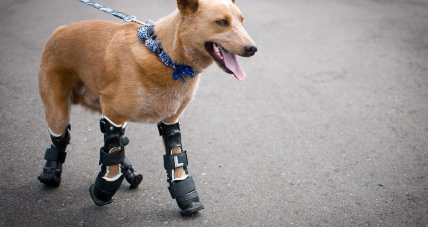 How To Make A Prosthetic Leg For A Dog